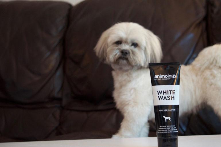 Lhasa Apso and white wash shampoo