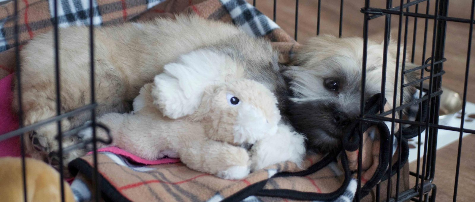 Lhasa Apso puppy sleeping in bed