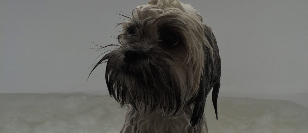 Lhasa Apso dog sitting in the bath