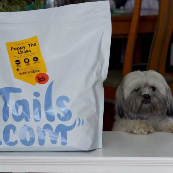 Lhasa Apso with tails.com dog food parcel