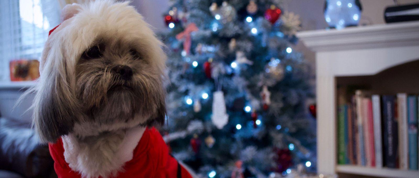 Puppy wearing Santa costume