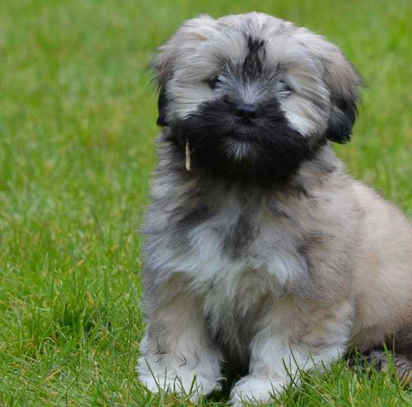 Puppy sitting on the grass