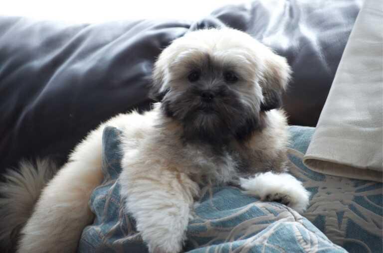 Puppy watching tv