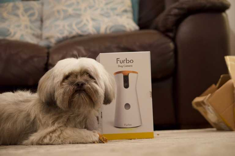 Lhasa Apso with Furbo camera boxed