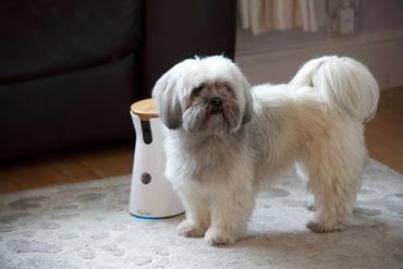 Lhasa Apso dog with Furbo camera unit