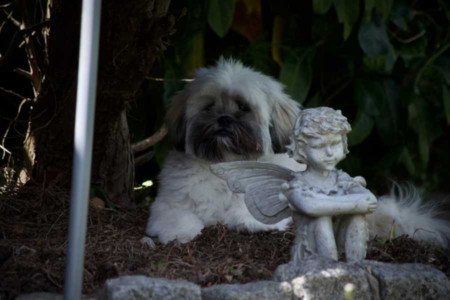 Lhasa Apso dog under tree in the dark looking afraid