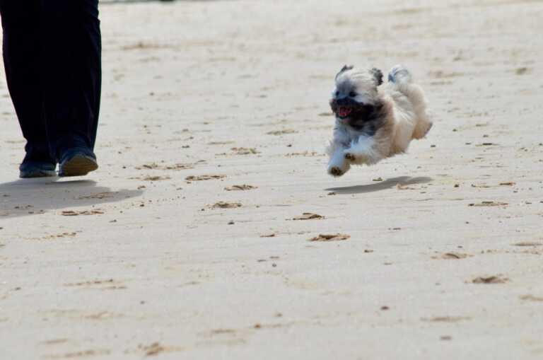 Puppy at the beach